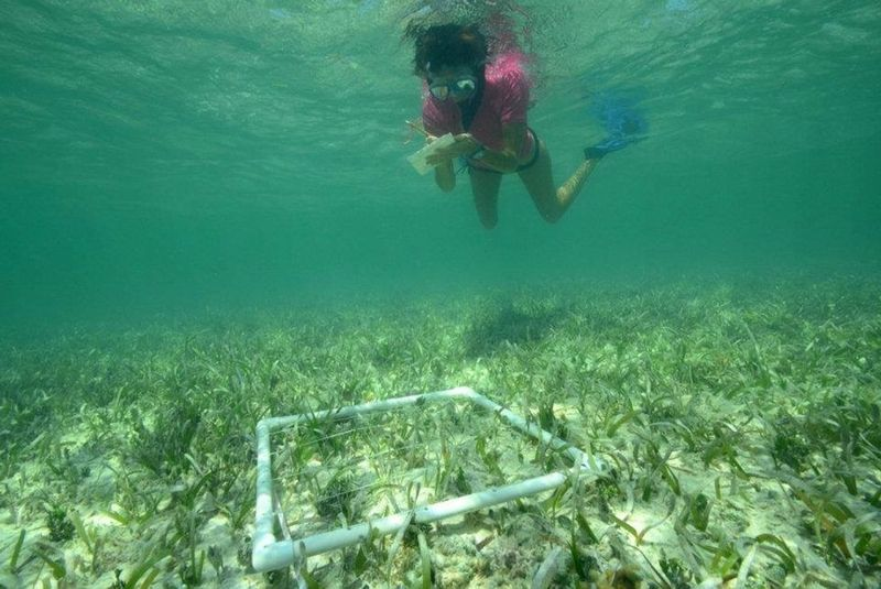 Image for REEF's Citizen Science Saturday: Seagrass Monitoring Workshop