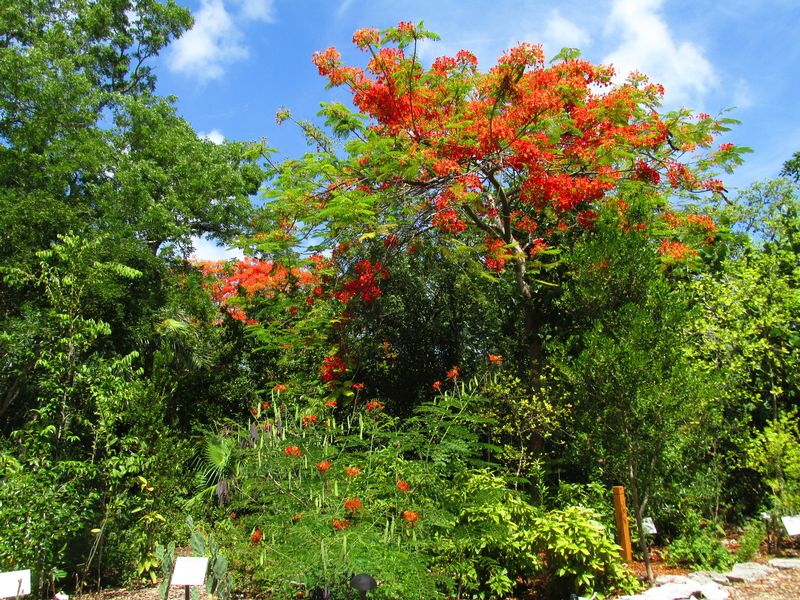 Image for Earth Day at  Key West Tropical Forest & Botanical Garden