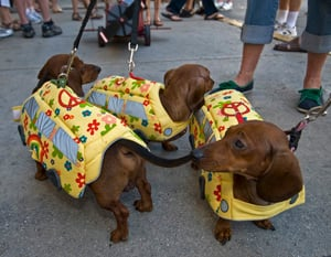 Image for Key West Dachshund Walk