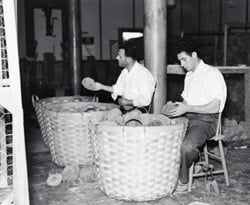 Two men cleaning and clipping sponges.