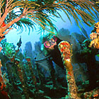 Wrecks And Reefs In The Florida Keys