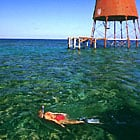 Snorkel Trips In The Florida Keys
