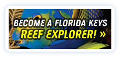 Become a Florida Keys Reef Explorer!