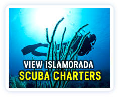 Click here to view a listing of Islamorada dive charters