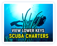 Click here to view a listing of Lower Keys dive charters