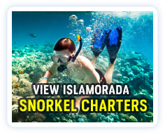 Click here to view a listing of Islamorada snorkel charters