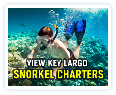 Click here to view a listing of Key Largo snorkel charters