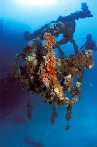 Coral encrusts the Eagle wreck.