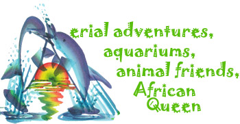 Aerial adventures, aquariums, animal friends, African Queen