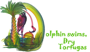 Dolphin swims, Dry Tortugas