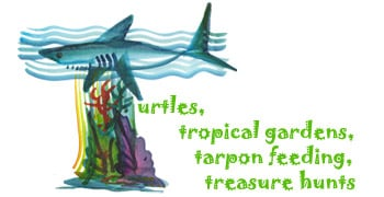 Turtles, tropical gardens, tarpon feeding, treasure hunts