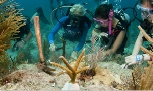 Scuba Divers Looking at the Coral in the Florida Keys