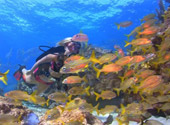 The Underwater World of the Florida Keys National Marine Sanctuary
