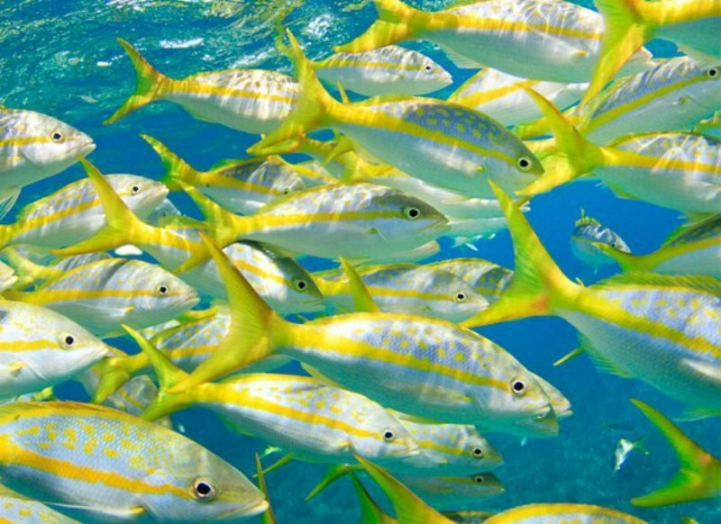 OFFSHORE FISHING CHARTERS out of ROBBIE'S MARINA - Image 1