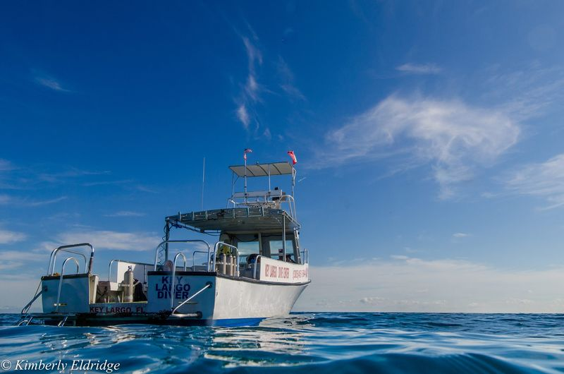 KEY LARGO DIVE CENTER - Image 1