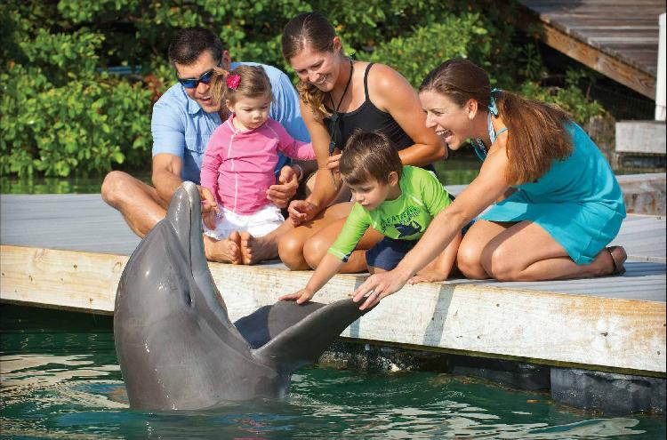Dolphin Connection at Hawk's Cay - Image 1