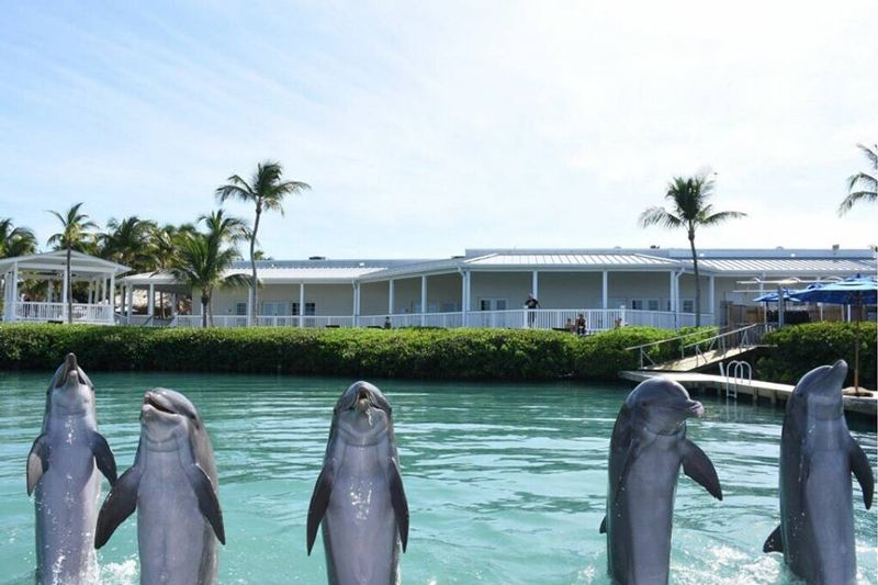 Dolphin Connection at Hawk's Cay - Image 2