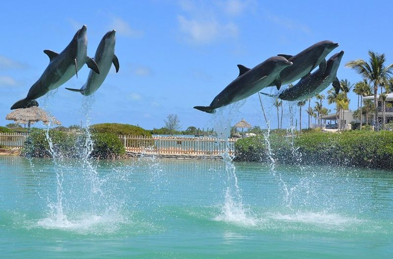 Dolphin Connection at Hawk's Cay - Image 3