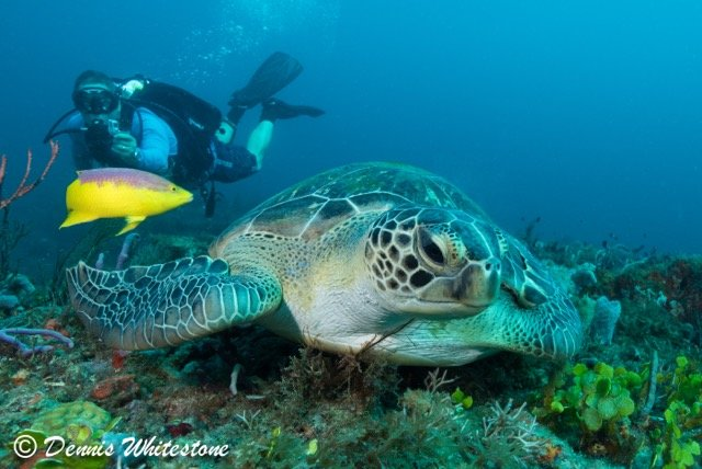 TROPIC SCUBA - PRIVATE SCUBA DIVING, SNORKELING & SIGHTSEEING CHARTERS - Image 1