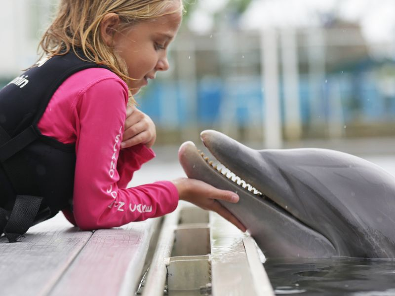 ISLAND DOLPHIN CARE a not-for-profit organization - Image 4