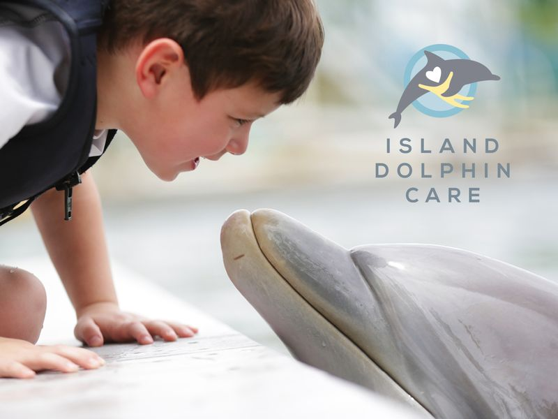 ISLAND DOLPHIN CARE a not-for-profit organization - Image 1