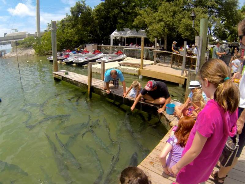 Find Islamorada Restaurants Bars And Dining Options Here