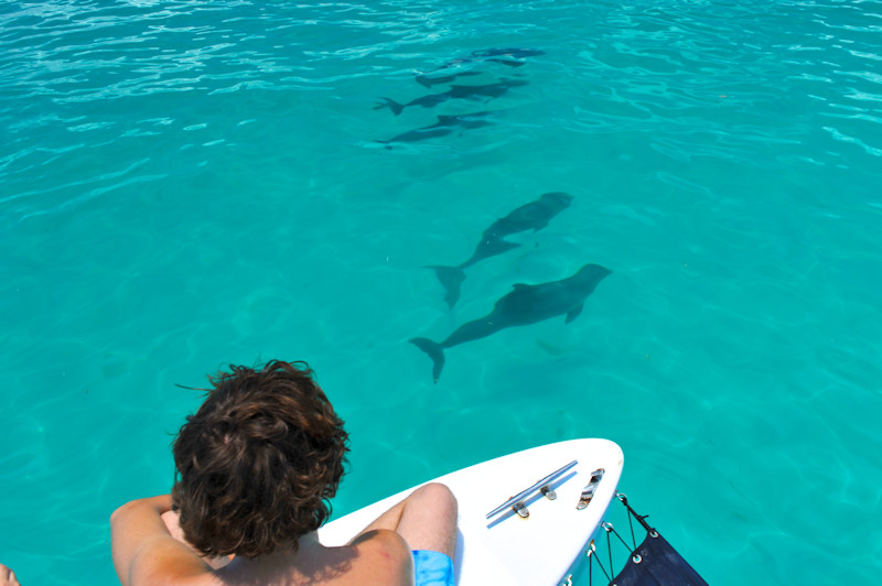 Dolphin Encounters by 888-Fla-Keys, the Best of the Florida Keys - Image 1