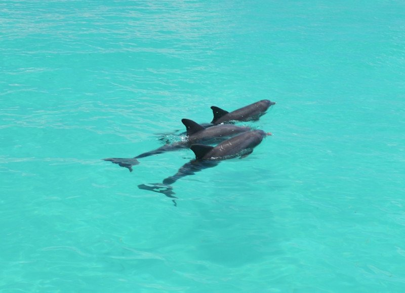 Dolphin Encounters by 888-Fla-Keys, the Best of the Florida Keys - Image 4