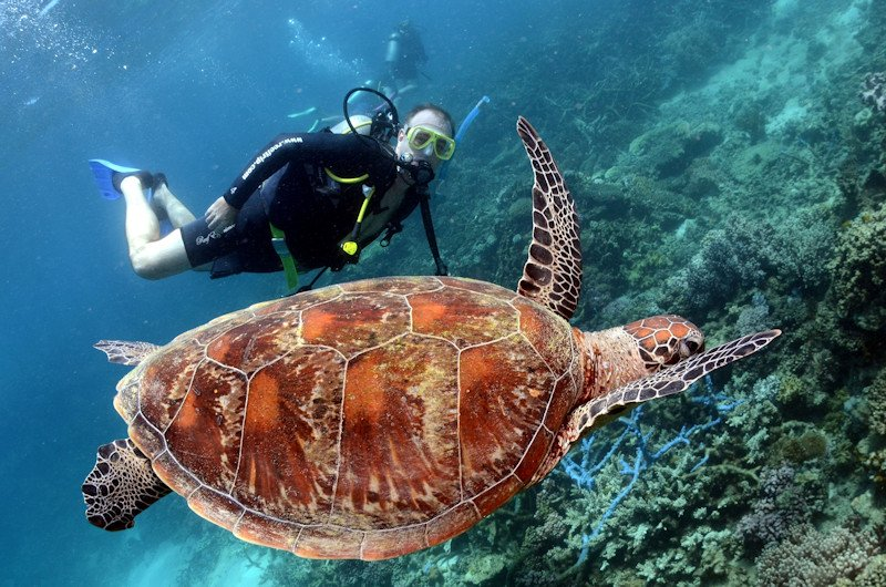 SCUBA Diving by 888-Fla-Keys, the Best of the Florida Keys - Image 1