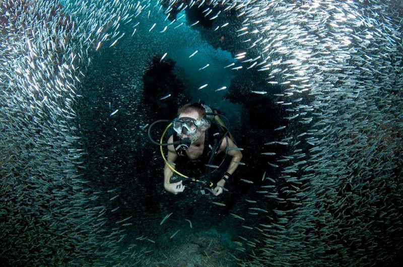 SCUBA Diving by 888-Fla-Keys, the Best of the Florida Keys - Image 2