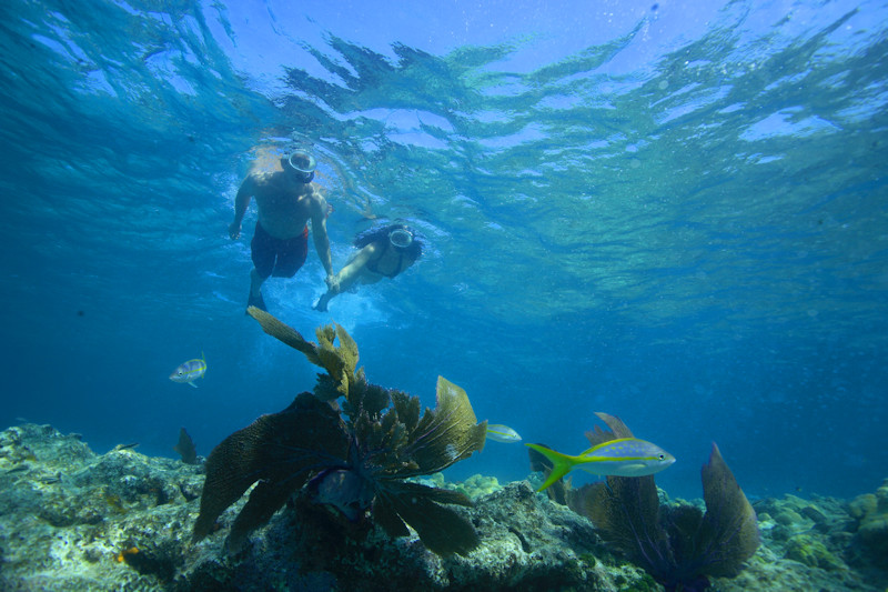 Snorkeling by 888-Fla-Keys, the Best of the Florida Keys - Image 2