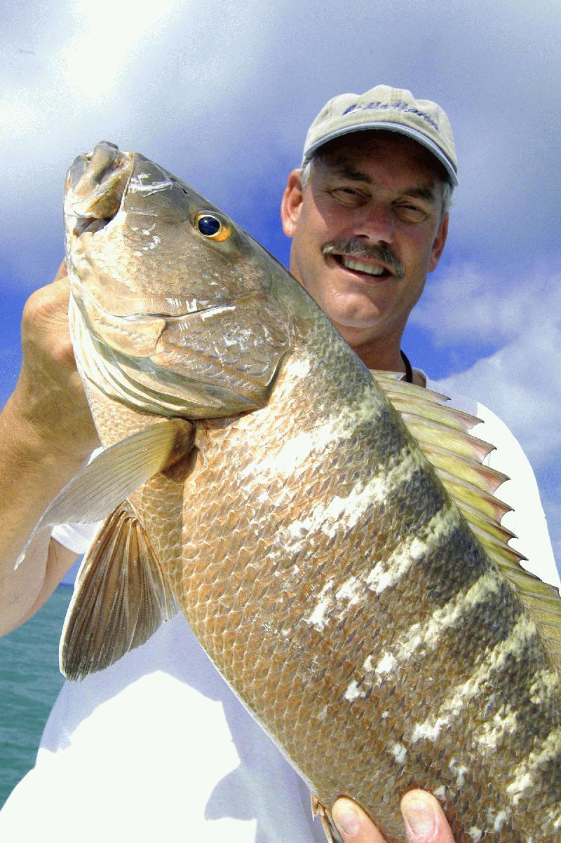 WRECK AND REEF FISHING DREAM CATCHER CHARTERS - Image 2