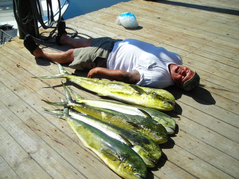 JOHNNY MADDOX FISHING CHARTERS ~ SPORTFISHING ADVENTURES - Image 1