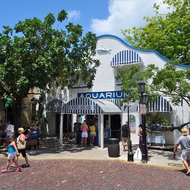 KEY WEST TOURS AND ATTRACTIONS - Image 3