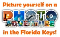 Picture yourself on a Photo Adventure in the Florida Keys
