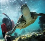 Underwater - Diving & Snorkeling Gallery