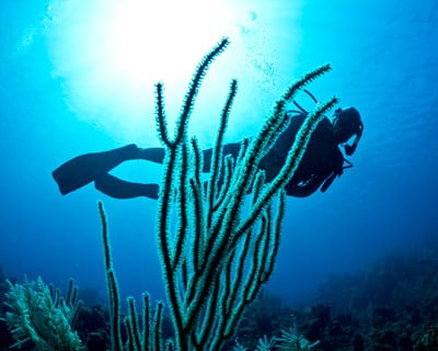 Key Largo Diving Charters