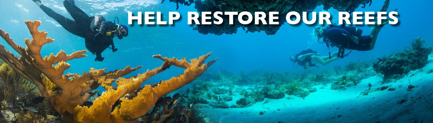 Help Restore Our Reefs