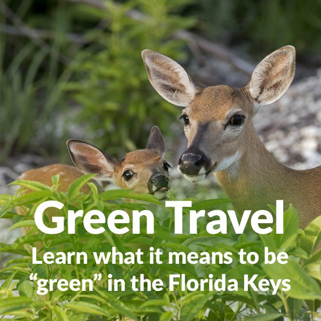 "Green Travel: Learn what it means to be ""green"" in the Florida Keys"