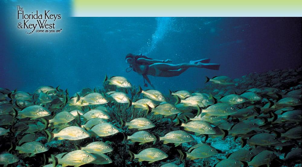 Florida Keys Scuba Diving Vacation planning | Florida Keys Snorkeling