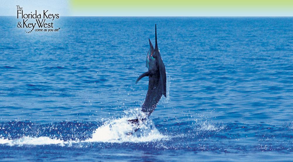 Florida Keys Fishing Amp Key West Fishing Info From The