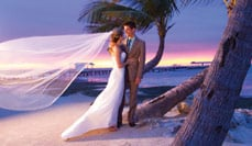 Browse All Wedding Business Listings