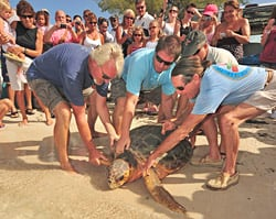 turtle release Key West