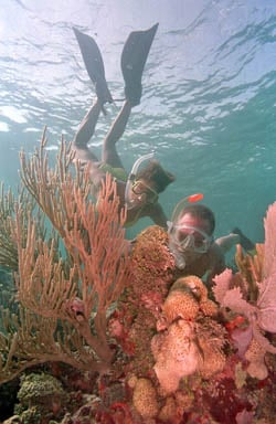 Keys voices keys reefs underwater wonderland keys voices snorkelers sciox Images