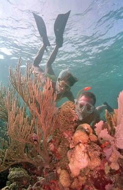 Key Largo Snorkelers