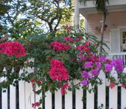 Key West picket fence house