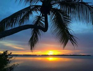 Sunset palms Andy