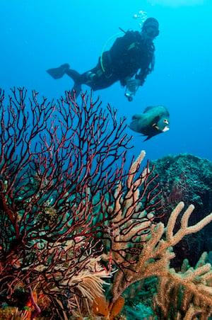 Divers off Islamorada Lower Keys