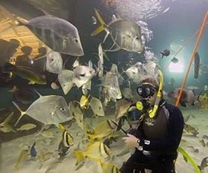 Keys' Aquarium Encounters