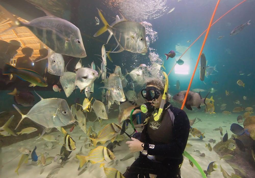 diver at Florida Keys Aquarium Encounters